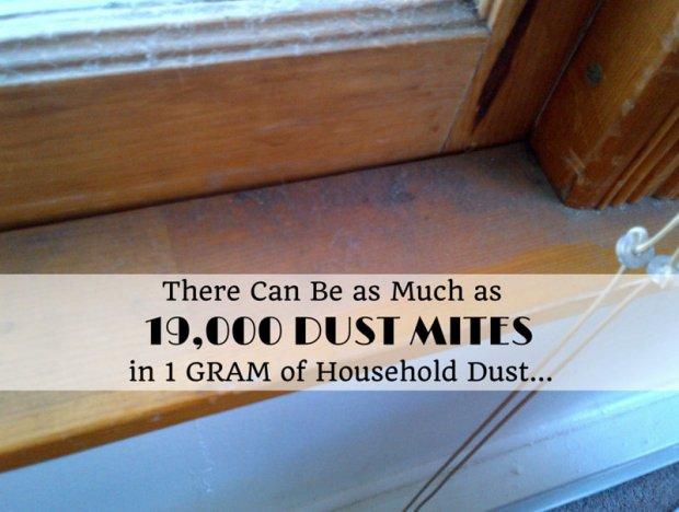 19000 dust mites image